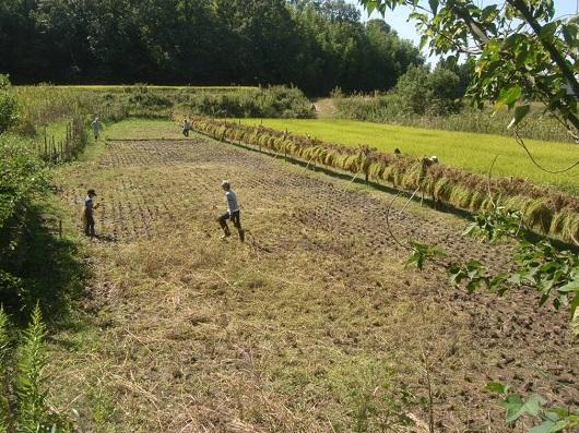昔ながらの稲作体験「稲刈り&餅つき」を開催しました!