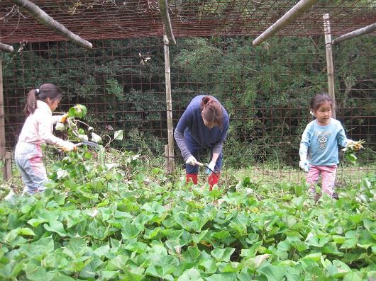 秋の味覚!森の畑で「芋掘り」体験!