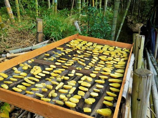 芋作りプログラム最終回「干し芋作り」開催レポート!