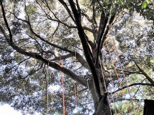 木と友だちになったよ!「ツリークライミング体験」