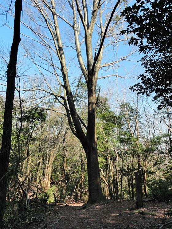 着々と整備が進む新登山コース「喜桜山」