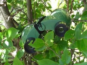 ホタルの里の生き物・植物を探そう!第2回ホタルマスターファミリー講座