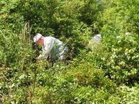 ヤマザクラの生育は順調!「おおだの森」の里山保全活動