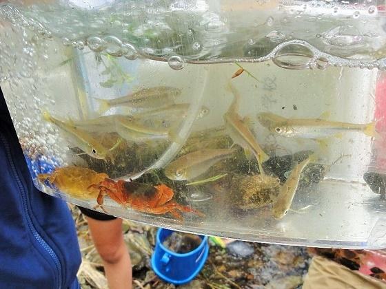 ホタルの里の自然に学ぼう!常磐小学校4年生が環境教室に参加