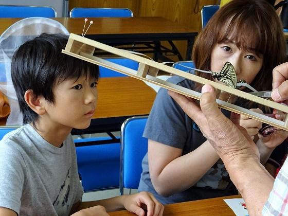 本格的な昆虫標本作りを学ぶ!(チョウ・トンボ編)