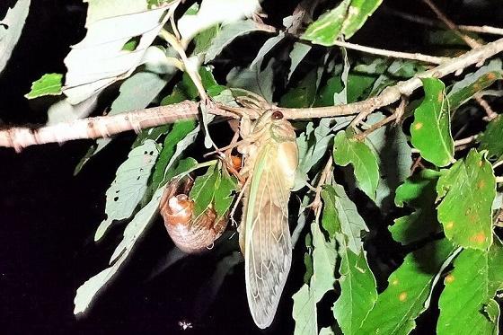 夜の森でカブトムシ探し&スターウオッチ(パート2)