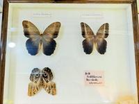 昆虫標本を使った「昆虫クイズ」の答え合わせ!