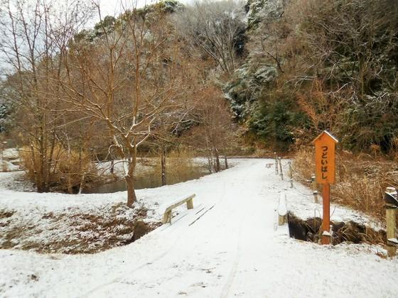 雪化粧した森