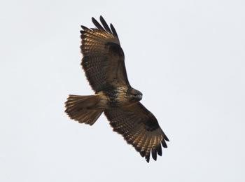 冬は野鳥観察に絶好の季節!森の探鳥会開催のお知らせ