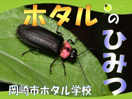 「鳥川ホタルまつりイベント」開催のお知らせ