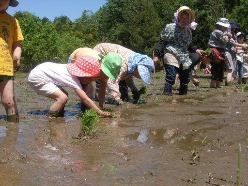 ご案内!「昔ながらの稲作体験プログラム」