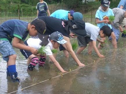まもなく始まる!「昔ながらの稲作体験プログラム」のご案内