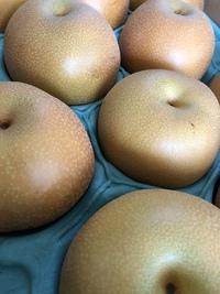 旬の「梨」を求めて  近藤果樹園さんへ