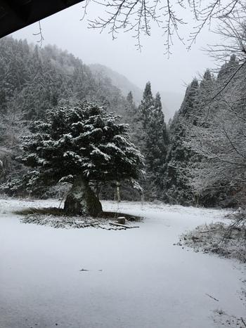 古民家も、お庭も、雪化粧。
