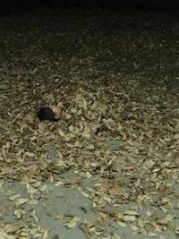落ち葉のお風呂