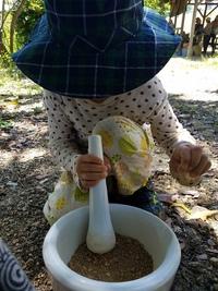 キクラゲ食べて、ベンガラ染めの染料作り、染める!