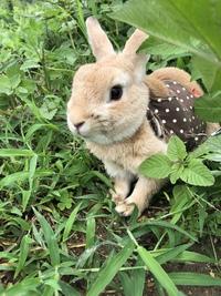 ウサギと草とり