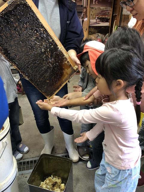 ハチミツを採って、お味見!