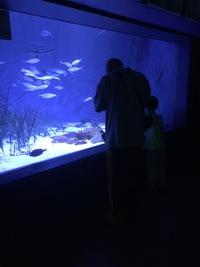 夜の水族館に、懐中電灯を持って潜入できる!20日まで