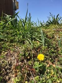 今日は体験会!春を探そう。