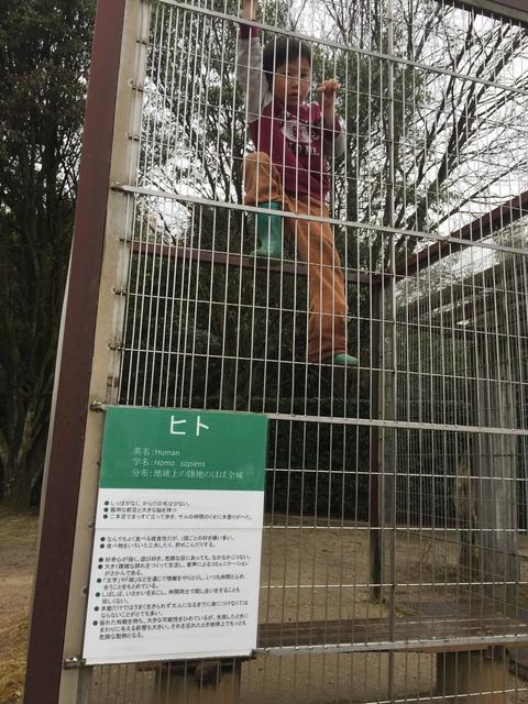 サルの檻の向かいには、ヒトの檻が!
