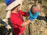 無農薬栽培の畑でお芋掘り。
