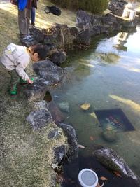鯉に餌やり来たけれど。。