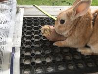 ウサギ  VS  サツマイモ
