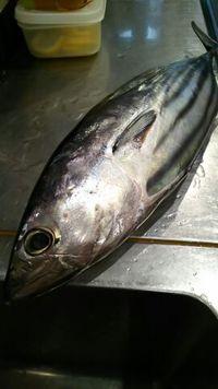 美味しい魚