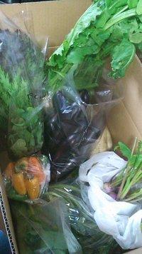 新鮮★くらら農園さんのお野菜たち