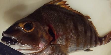 鮮魚❗️うれしいじゃん