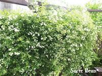 *モッコウバラが咲きました♪ &minneお休み中です