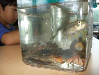 ホタル学校「この生き物は在来種?」を開催しました!