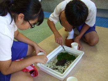 美川中学校の生徒2人がホタル学校で職場体験をしました!