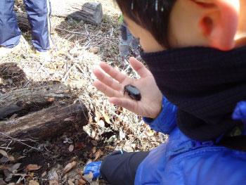 わんPark「冬の生き物探しをしよう」を開催しました!