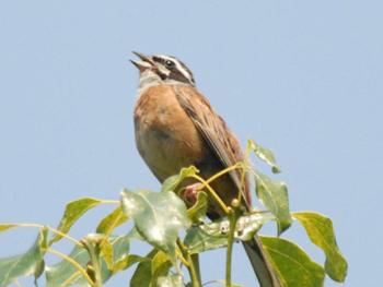 ホタル学校「バードコールを持って野鳥観察」を開催しました!