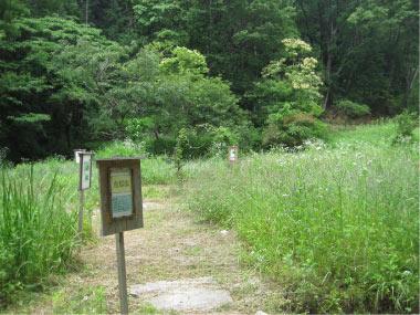おかざき自然体験の森「夏の花パート1」