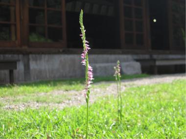 おかざき自然体験の森「夏の花パート2」