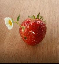 今日のイチゴの会