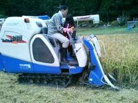 稲刈りのお手伝い
