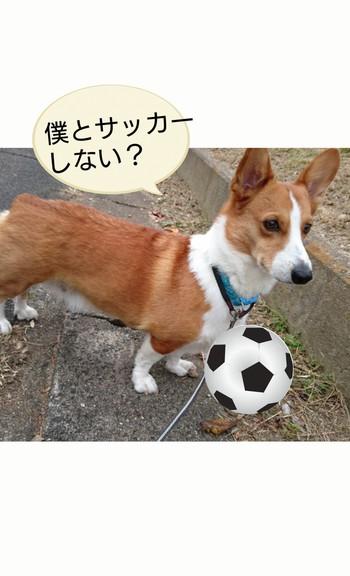 サッカーしない?