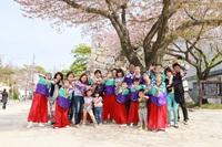 4/7夜桜お花見会&踊りのお知らせ