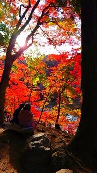 午後の香嵐渓