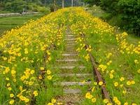 廃線を飾る花