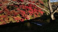 紅葉が色付き始めました