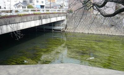 川藻たなびく