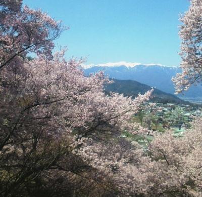 南アルプスと桜