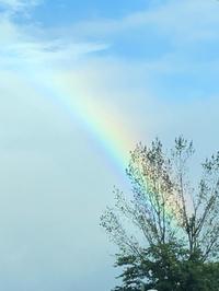 昨日は虹が見れました♪(^∇^)