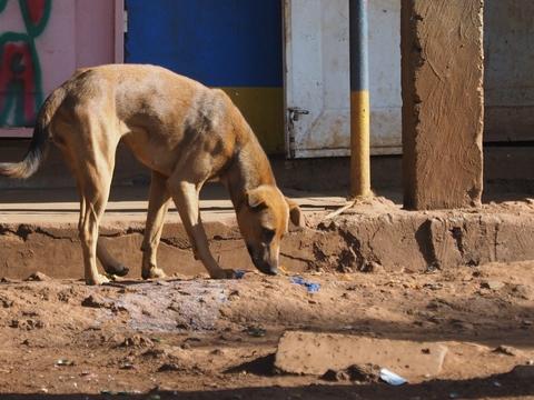 街に徘徊する犬(タンザニアにて)