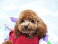 犬と楽しく、幸せな毎日のために・・・、無駄吠えする犬、噛む犬などなど、問題犬を無くしたい!!